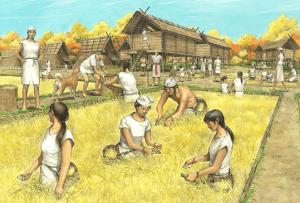 おせち料理があったとされる弥生時代の稲作の様子