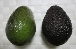 左側が熟していない緑色のアボカドで右側が熟している黒色のアボカド